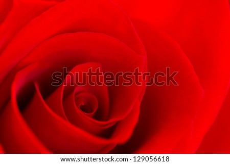 close-up image of a single red rose