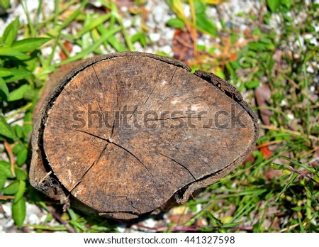 Close up image of a wooden tree stump plaque on a sandy beach with vegetation, can be used as a sign board.