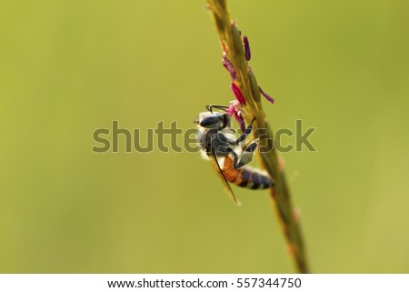 Close up image of bee on flower with natural green background