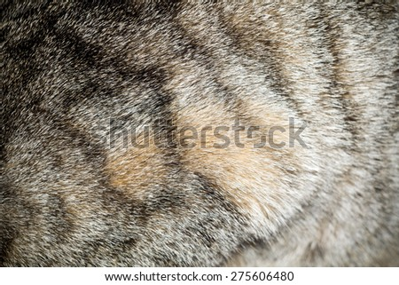 Close up image of cat fur, grey color with black stripes. - stock photo