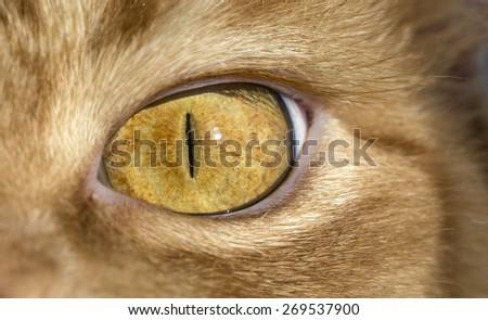 Close up image of cat's eye. Red orange fur cat head eye macro narrow look  - stock photo