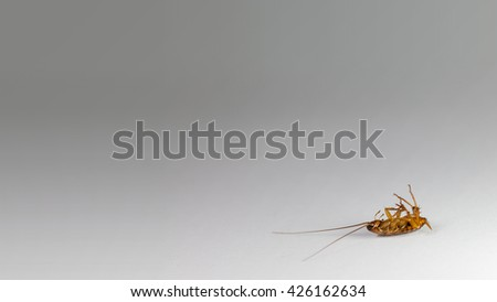 Close up image of dead cockroach on a white grey gradient background, Right bottom position for web design - stock photo