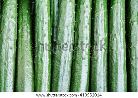 Close up image of Japanese cucumber,suhyo