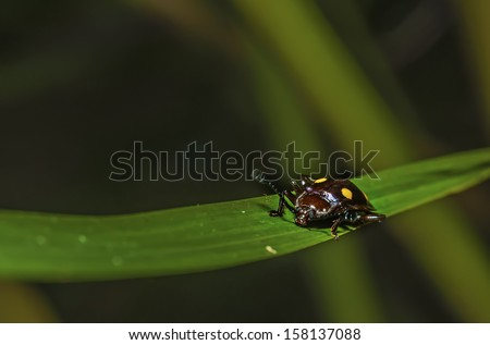 close up image of one of bug species with selective focus at the eyes  at Endau Rompin State Park, Pahang, Malaysia
