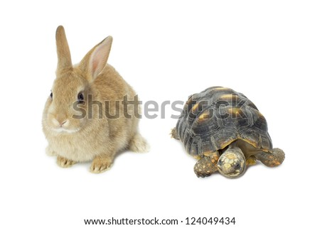 Close up image of rabbit and turtle against white background - stock photo