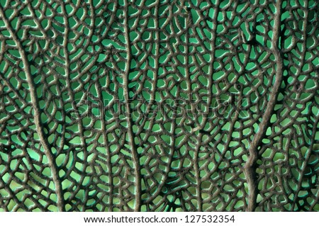 Close up image of sea fan for nature background - stock photo