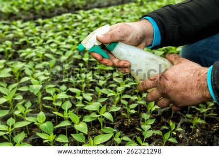 Close up in the hands of a man while spraying the small plants in a greenhouse - stock photo
