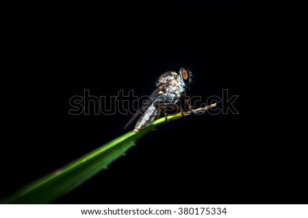 close up insect on black background ideal for isolated and bug lovers