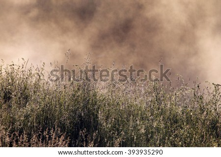 close-up isolated grass with dew in the rays of the rising sun  - stock photo