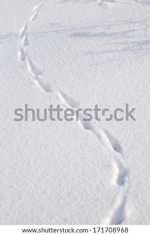 close-up isolated rabbit tracks on a clean, flat surface of the snow - stock photo