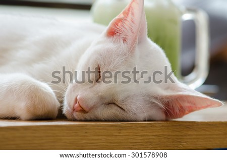 close up khao manee cat or diamond eye cat. soft focus. - stock photo