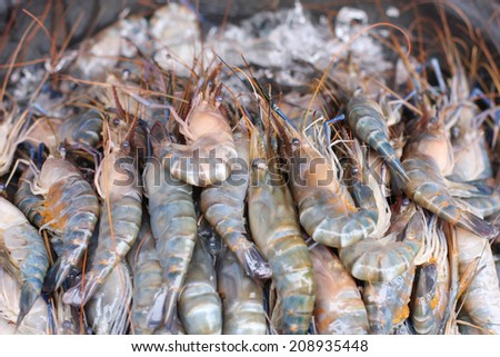 Close up king prawn in the market - stock photo