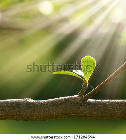 Close-up leaves and branches - stock photo