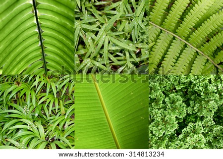 Close up leaves of the tropical plants - stock photo