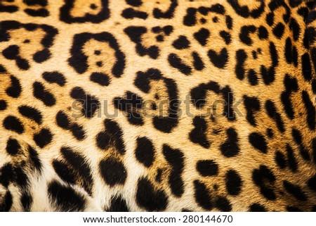 Close up leopard spot pattern texture background - stock photo