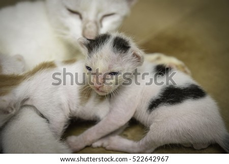 close up little kittens, Cat nursing