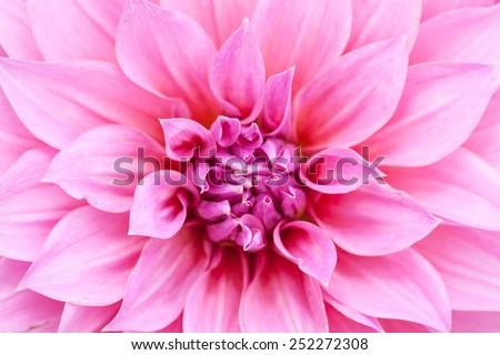 Close up macro center beautiful pink flower  - stock photo