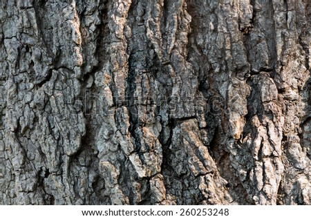 Close up macro detail of the trunk of a tree - stock photo
