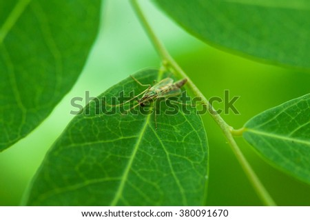 Close up, macro mosquito on green leaf with colorful background in the morning light - stock photo