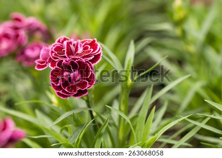 Close up macro of a purple flower.  Shallow depth of field.  - stock photo