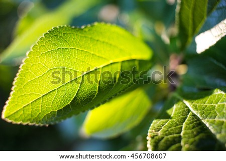 Close up macro pattern of a green leaf in sunlight