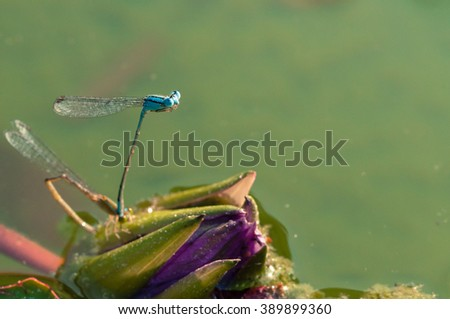 Close up, macro photo dragonfly, insect, love, Dragonfly eye focus with colorful background - stock photo