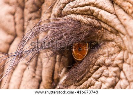 Close up macro shot of an elephant eye - stock photo