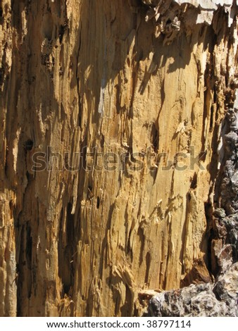 Close-up, macro shot of brown tree bark texture for background.