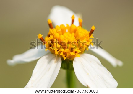 Close up macro white and yellow flower in forest and colorful background in morning sunlight - stock photo