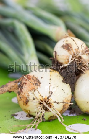 Close up macro young onions with soil