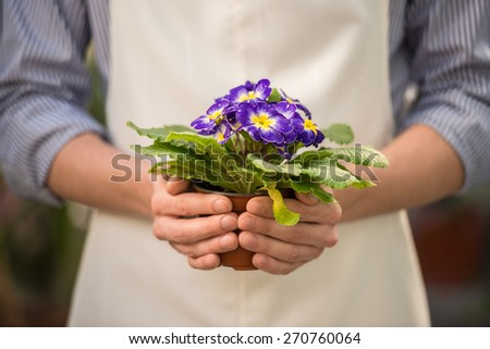 Close-up. Male florist holding flower pot in flowers shop. - stock photo
