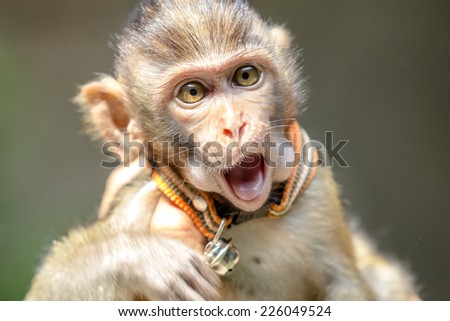 Close up monkey open mouth - stock photo