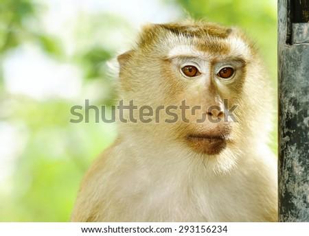 Close-up monkey portrait with shade light - stock photo