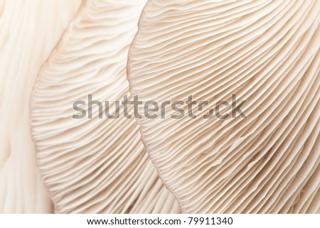 Close up mushroom - stock photo