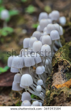close up mushroom in deep forest, mushrooms growing on a live tree in the forest