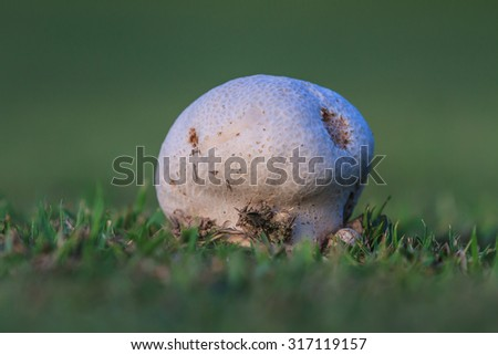 close up mushroom in deep forest, Thailand