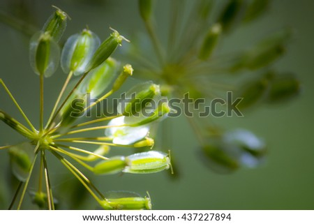 Close-up nature background of unusual green flower with seeds  - stock photo