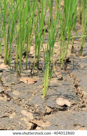 Close up nature dry crack earth at rice field - stock photo