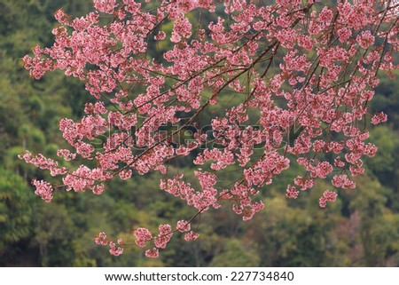 close up nature in many patten style - stock photo