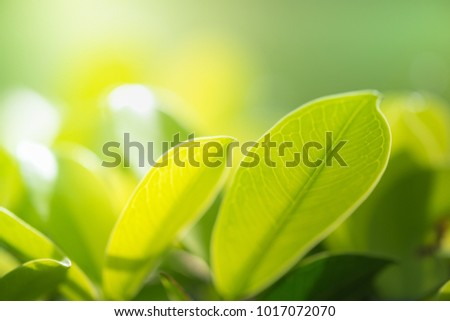 Close up nature view of green leaf under sun light. Natural green plants landscape using as a background or wallpaper.