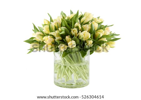 Close-up of a beautiful bouquet of white tulips in a glass vase. Isolated on white background