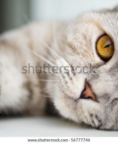 Close-up of a beautiful cat - stock photo
