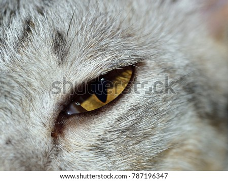 Close up of a beautiful cat, selective focus.
