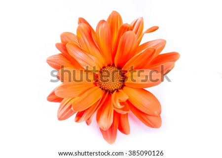 Close Up Of A Beautiful Daisy In A Deep Orange Color For A Spring Concept