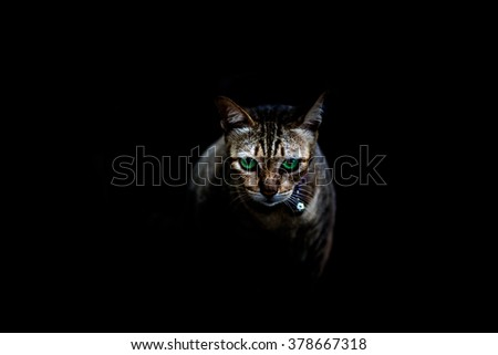 Close up of a beautiful eyes cat on black background.  - stock photo