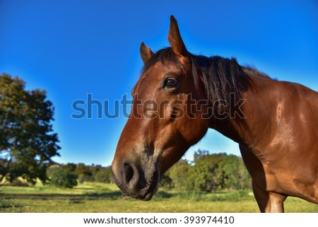Close-up of a beautiful horse