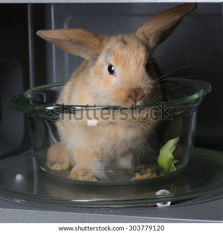 Close-up of a beautiful little live rabbit in the microwave, studio - stock photo