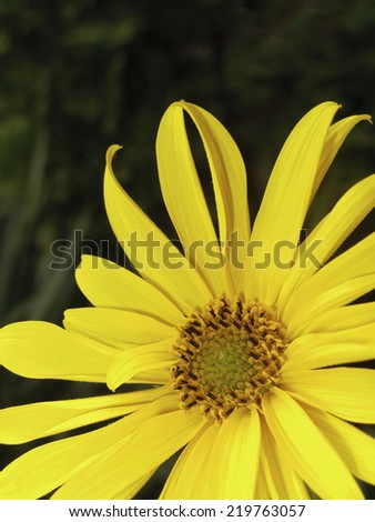 Close Up of a beautiful yellow flower with space for text in the upper third - macro 2