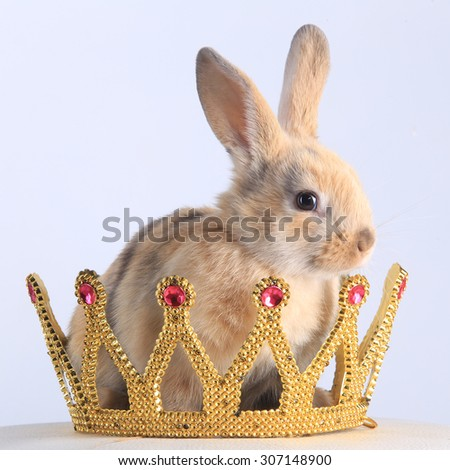 close-up of a beige rabbit wearing a crown on a white background studio - stock photo
