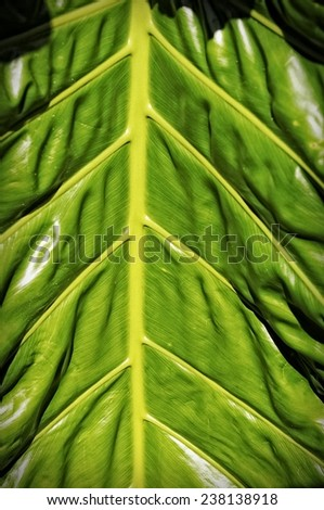 Close-up of a big leaf makes a great nature background - stock photo